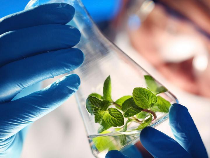 Sử dụng côn trùng đem lại nhiều lợi ích hơn so với dùng các thiết bị phun hóa chất.