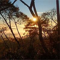 """""""'Cơn lốc tuyệt chủng"""" đang tràn qua cánh rừng nhiệt đới ở Brazil"""