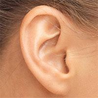 Xác định được loại protein có thể giúp người mất thính lực nghe lại bình thường