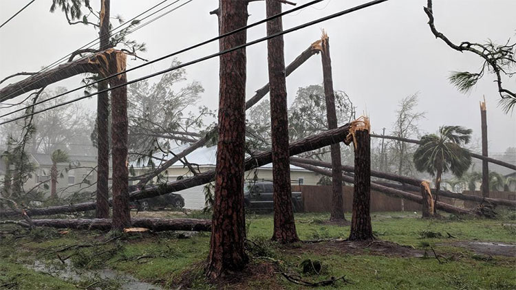 Bão Michael quật đổ hàng loạt cây ở thành phố Panama.