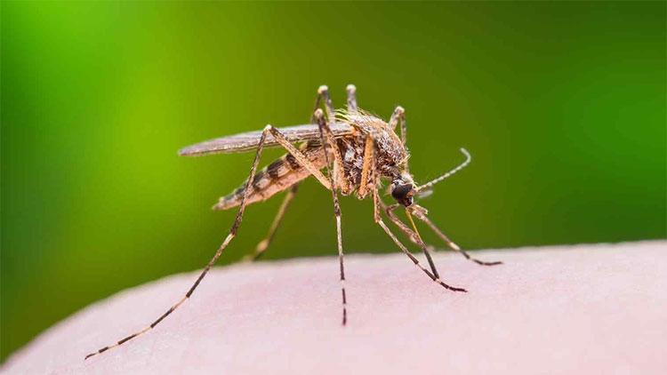 Một viên đá lạnh chườm vào vết muỗi đốt cũng cho tác dụng tương đối hiệu quả.