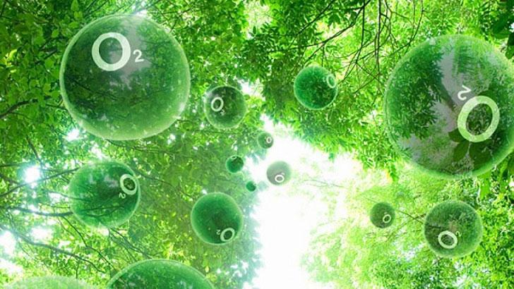 Hydrogenase cũng giúp gia tăng đáng kể lượng năng lượng được sản xuất và lưu trữ.