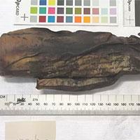 Dùng máy chụp cắt lớp, các nhà nghiên cứu đọc được cả văn tự cổ 500 năm đã bị cháy sém