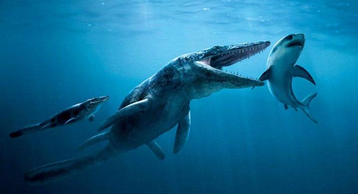 Tylosaurus được coi là quái vật có sức mạnh vô song ở đại dương cách đây 85 triệu năm.