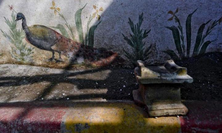 Con chim công được vẽ sát chân tường để tạo cảm giác như đang đi trên mặt đất.