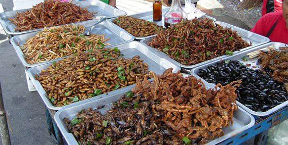 Các món ăn từ côn trùng.