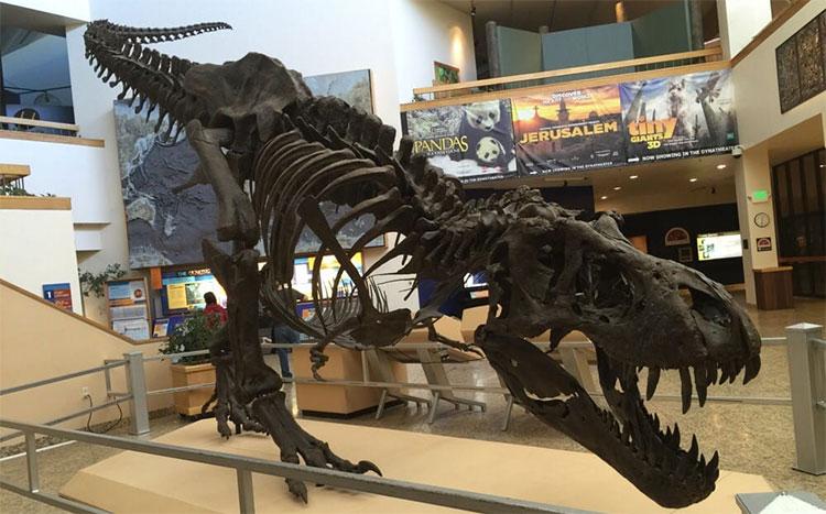Bộ xương khủng long bạo chúa mà Bảo tàng Lịch sử tự nhiên New Mexico sở hữu