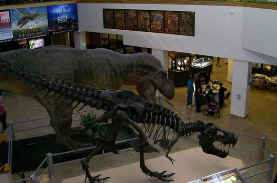 Trong một triển lãm cách đây ít năm, T-Rex từng được phục dựng nhưng với vẻ ngoài xù xì hơn