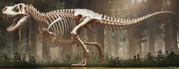 Khung xương khủng long mà các nhà khoa học sở hữu
