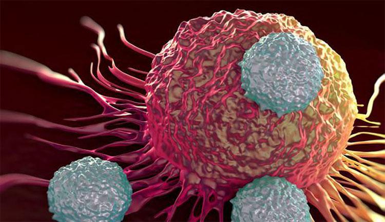Tế bào T tấn công tế bào ung thư.