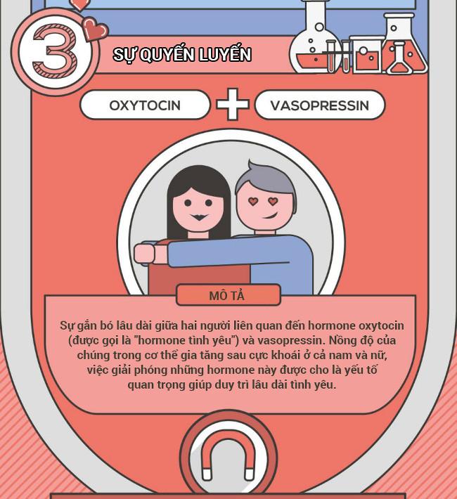 Sự gắn bó lâu dài giữa hai người liên quan đến hormone ocytoxin và vasopressin.