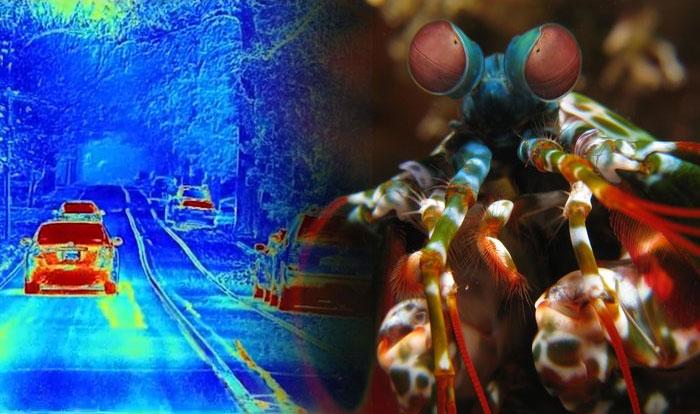 Một chuyến đi trên đường trong sương mù, ảnh thu được từ camera phân cực (trái) và hình tôm con bọ ngựa (phải)