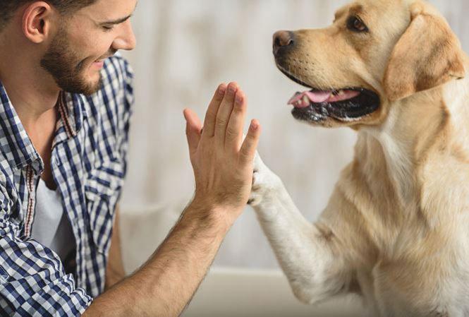 Chó là người bạn thân thiết của con người.