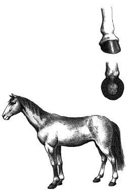 Đóng móng sắt cho ngựa