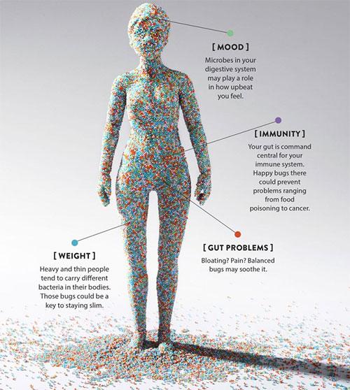 Đây là mô phỏng hệ vi sinh vật trên cơ thể người, nhưng hệ virus người còn nhiều gấp 10 lần thế.