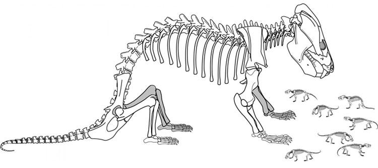 Kayentatherium wellesi với khả năng sinh sản gấp nhiều lần động vật có vú ngày nay.