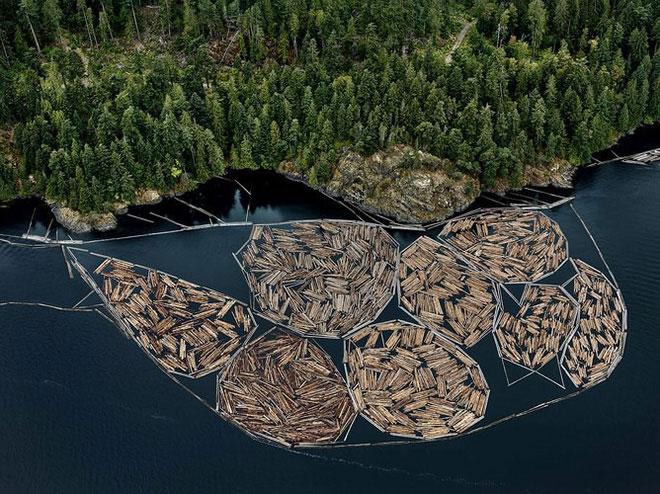 Những khúc gỗ mới đốn, đảo Vancouver, Bristish Columbia, Canada năm 2016.