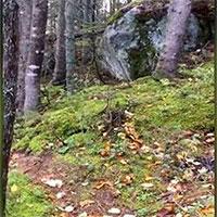 """Lạ lùng hiện tượng """"rừng biết thở"""" ở Canada"""