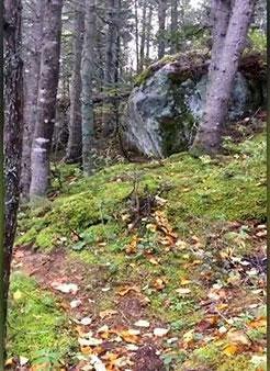 """Hình ảnh """"khu rừng biết thở"""" ở Canada đang khiến cư dân mạng xôn xao."""