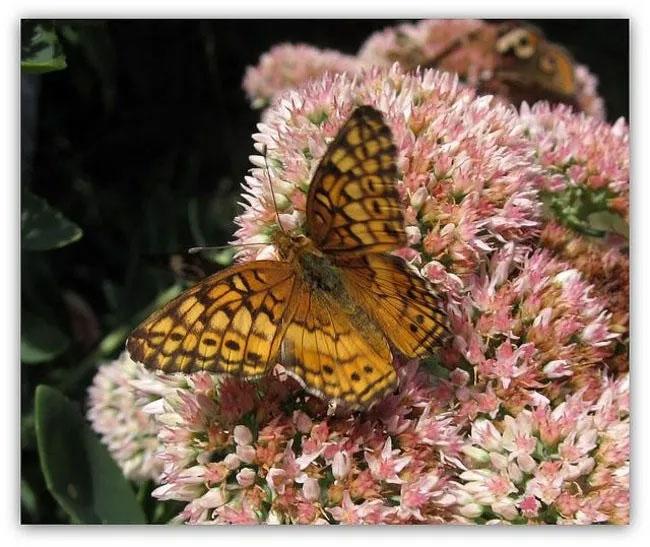 Con bướm đậu trên bông hoa