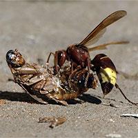 Trận chiến tí hon giữa gián và ong bắp cày cùng cái kết bất ngờ
