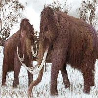 Tại sao khoa học lại phải bỏ ra hàng chục năm trời chỉ để hồi sinh voi ma mút?
