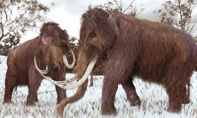 Voi ma mút chính là loài vật con người có thể hiểu nhiều nhất thông qua các bằng chứng hóa thạch.