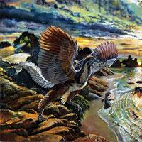 Giải mã hóa thạch chim phát hiện ra loài chưa từng biết đến trên Trái đất