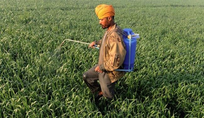 Công nghệ mới hứa hẹn giúp bảo vệ hàng triệu nông dân Ấn Độ.