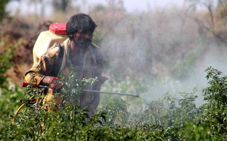 Phơi nhiễm thuốc trừ sâu gây ra rất nhiều hệ lụy nghiêm trọng đến sức khỏe con người.
