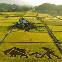 """Trung Quốc nghiên cứu thành công """"lúa biển"""", có khả năng nuôi 80 triệu người"""