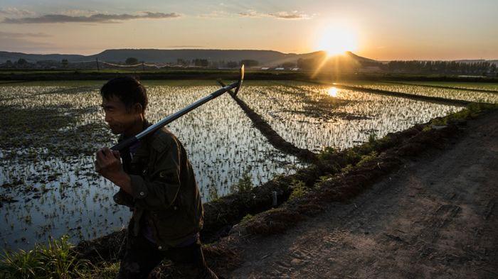 Một người nông dân từ ruộng trở về nhà tại tỉnh Hắc Long Giang, Trung Quốc.