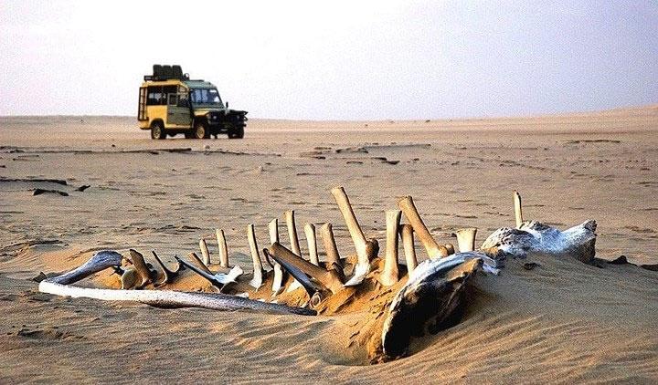 Bờ biển Skeleton, Namibi