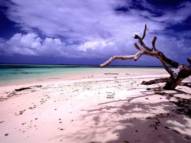 Đảo Laura thuộc quần đảo Marshall
