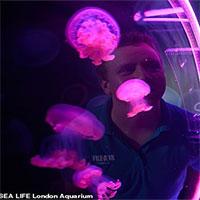 """Loài sứa độc khổng lồ """"tái xuất"""" sau gần 60 năm biến mất"""