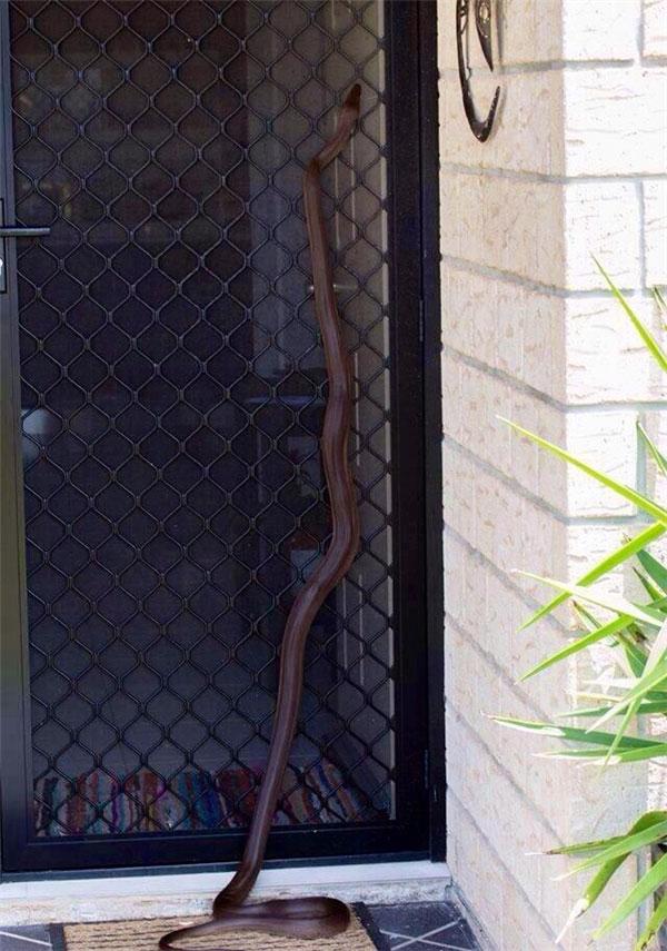 Vì dân số rắn quá đông nên việc chúng chui vào nhà hóng mát là chuyện hết sức bình thường.