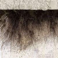 Sự thật kinh dị đằng sau bức tường của tòa nhà tự nhiên mọc lông