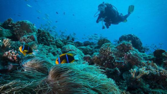 Ảnh chụp một thợ lặn lặn trên một rặng san hô ở Palau