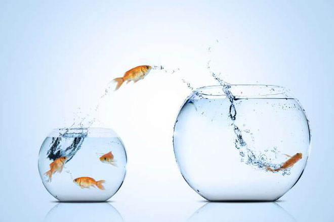 Nuôi cá vàng trong bể nhỏ - có thể bị cấm tại Ý đó