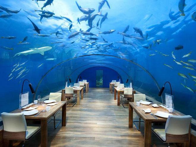 Nhà hàng có tên Ithaa nằm sâu dưới biển.