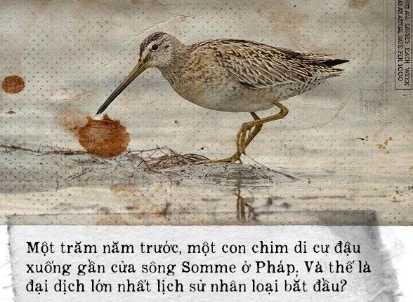 Chim di cư đậu xuống cửa sông