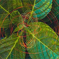 Đường, ánh sáng và lĩnh vực khoa học mới giúp chúng ta không phải phụ thuộc nhiên liệu hóa thạch?