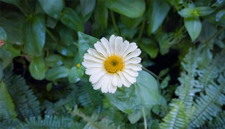 Một đóa hoa lâu nhất có thể là đặt nó trong nhiệt độ gần với điểm đóng băng.
