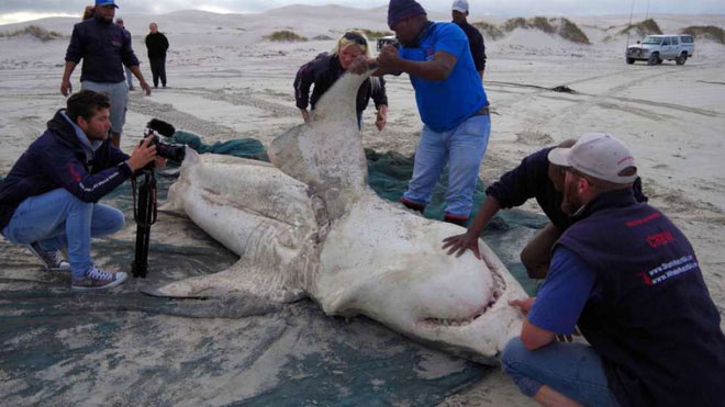 Một trong những con cá xấu số dạt vào bờ.