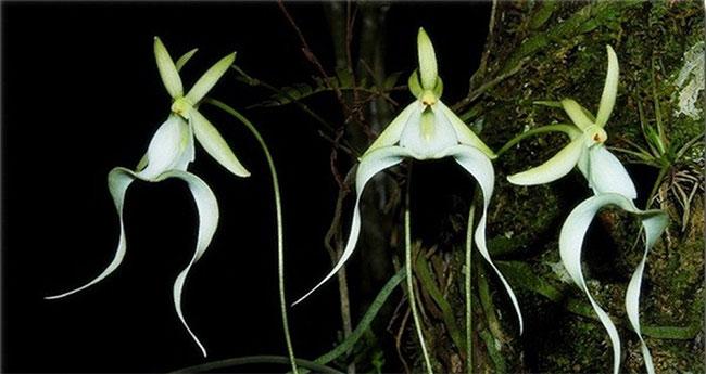 Bởi hoa lan ma cần phát triển tại nơi vừa có độ ẩm cao, lại có nhiệt độ cao.