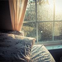 Ánh sáng Mặt trời có thể làm giảm lượng vi khuẩn trong nhà bạn