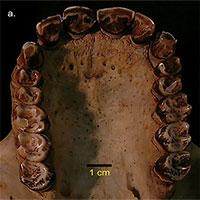 Phát hiện hoá thạch loài vượn nhỏ nhất thế giới sống cách đây 12,5 triệu năm
