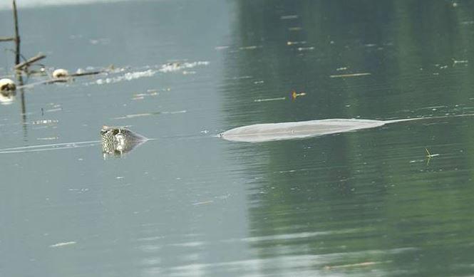 Rùa Hoàn Kiếm
