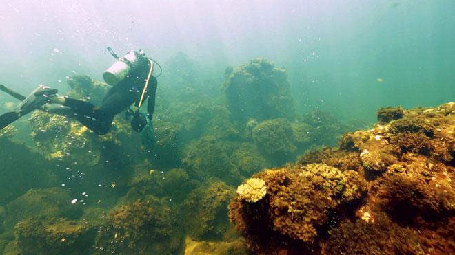 Nồng độ axit trong nước biển cũng lớn hơn bao giờ hết.