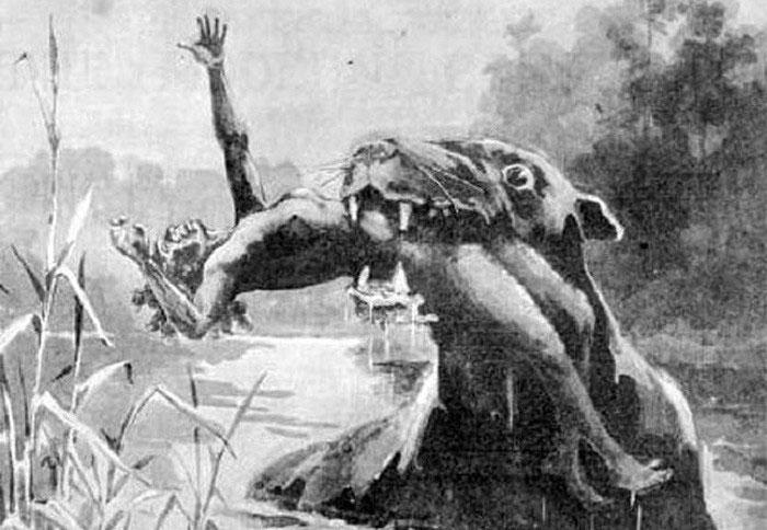 Hình dáng của Bunyip khá giống các loài động vật có vú.
